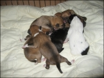 8 adorable puppies for adoption or for fostering!