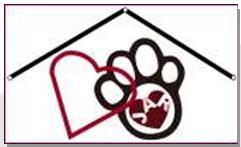 Jaiya's Animal Rescue - Shanghai
