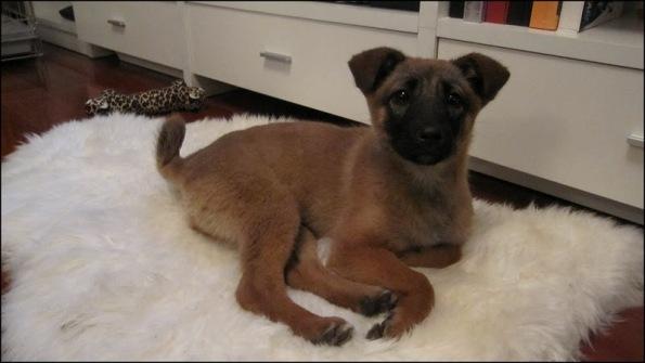 Found little puppy.....