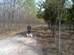 Walking with Hua Hua