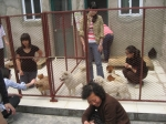 students interacting with the dogs...