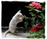 Rosita playing with her flowers