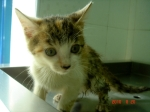 Callie (adopted)