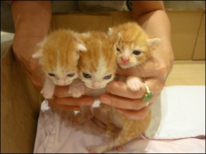 3 kittens abandoned
