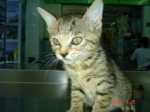 Tabbie (adopted)
