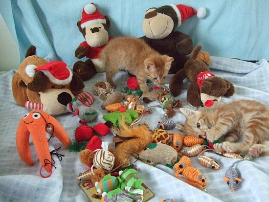 Frederick & Fredolin playing amongst the toys!