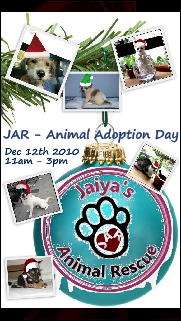 JAR - Adoption Day 12th December!