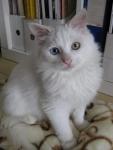 Fluffy Leoncio