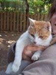 Sweetie, mum cat