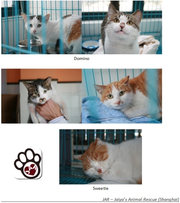 TNR Cats