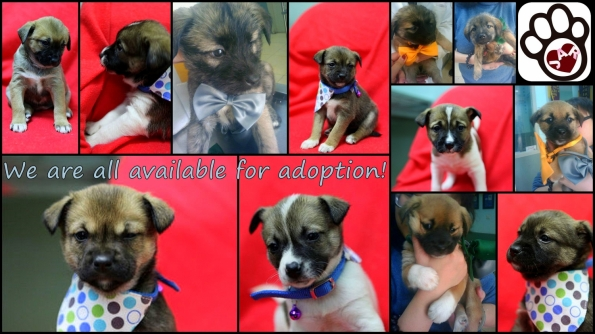 WE ARE AVAILABLE FOR ADOPTION!