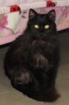 Cedric sitting