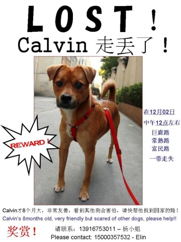 Lost Dog - Calvin