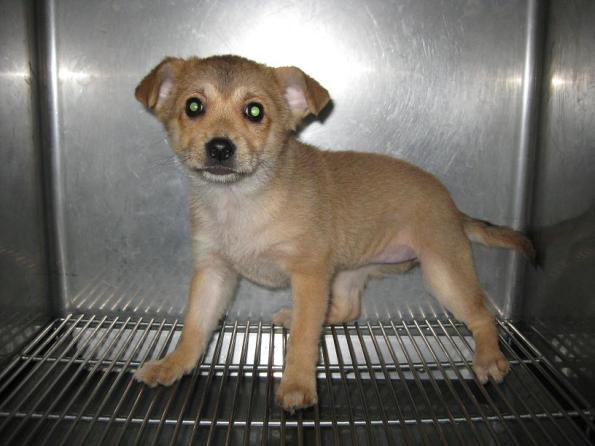 Last puppy