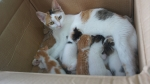 Mother cat and her 7 kittens
