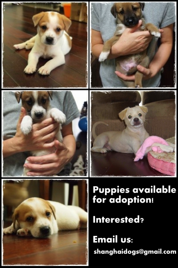 Puppies for adoption!