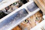 9-08-shanghai-cat-rescue-11pg