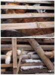9-08-shanghai-cat-rescue-2