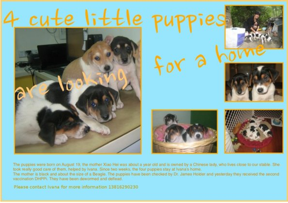 Puppies available!
