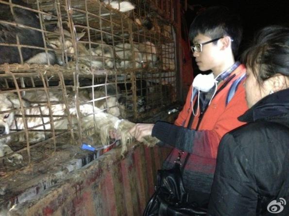 3.05 Guiyang nDog Rescue-22
