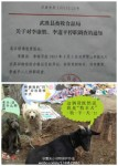 Final Victory of 3.02 Chongqing Dog Rescue-10