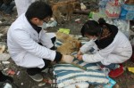 Final Victory of 3.02 Chongqing Dog Rescue-2
