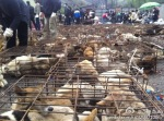 Final Victory of 3.02 Chongqing Dog Rescue-6