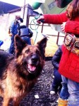 Final Victory of 3.02 Chongqing Dog Rescue-reunited with  owner
