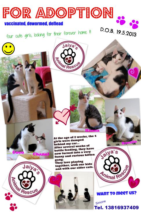 1 Kittens for adoption